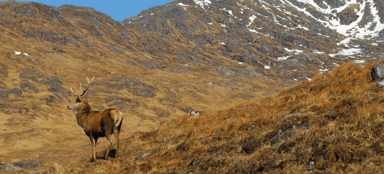 red deer stag hunting costs scotland