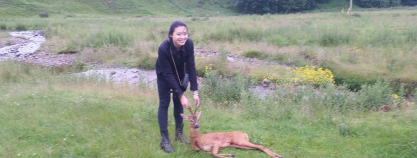 roe buck scottish borders