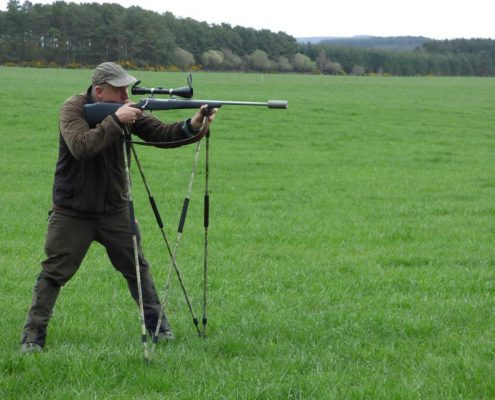 roe buck summer holiday in scotland hunting