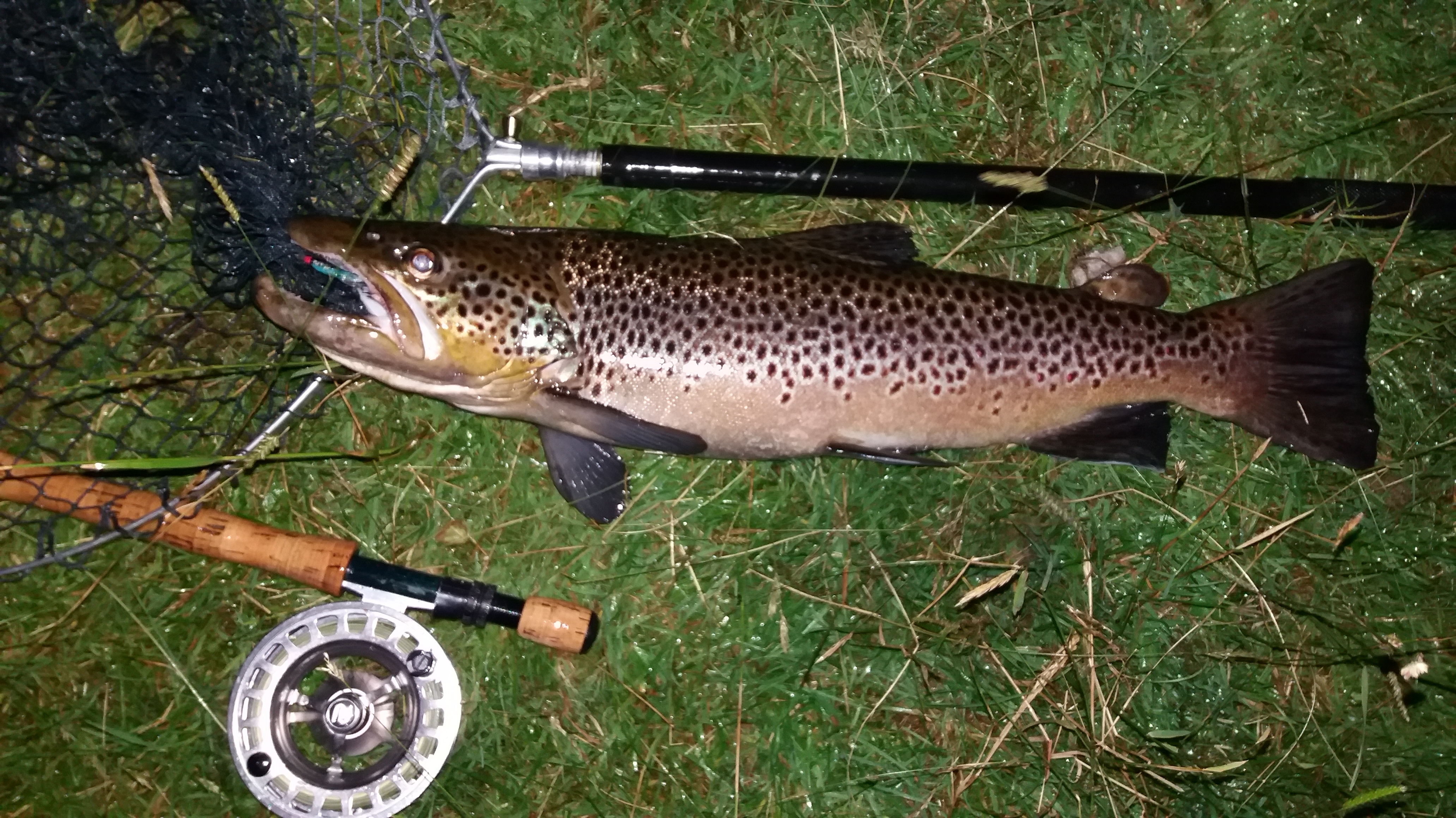 trout and brown trout fishing