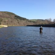 wading Scottish salmon fishing