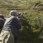deer shoot scotland
