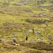 walked up hunting highlands scotland