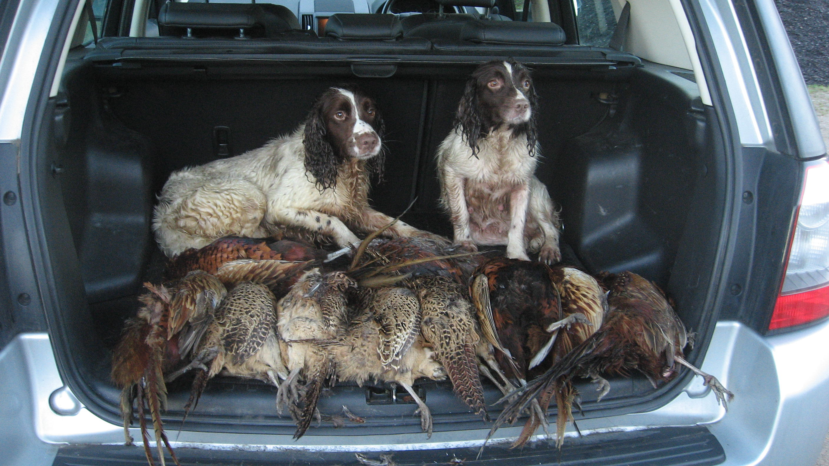 mixed bag wing shooting scotland