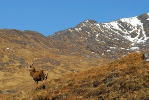 stag hunting seasons in Scotland