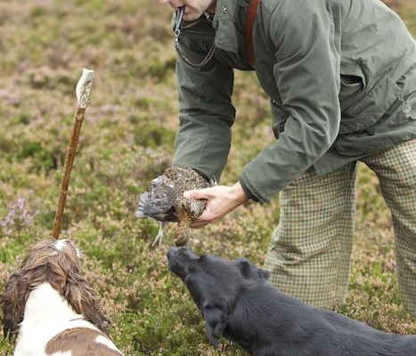 highland holiday grouse wing shooting