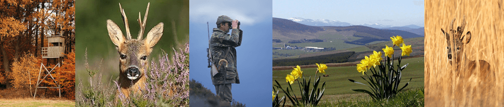 summer hunting experience scotland