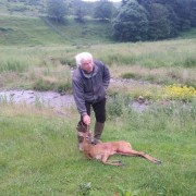 scottish roe buck