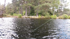Summer holiday in scotland trout