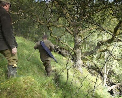 forest deer stalking in scotland