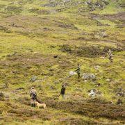 walked up hunting highlands scotland