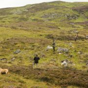 grouse shooting scotland 2018