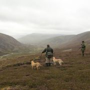 grouse shooting highlands