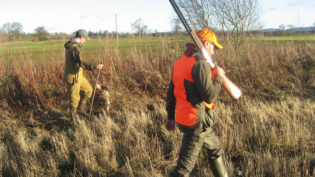 wing shooting pheasant 2019